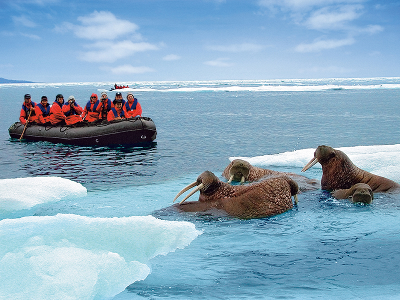 zodiac in arctic