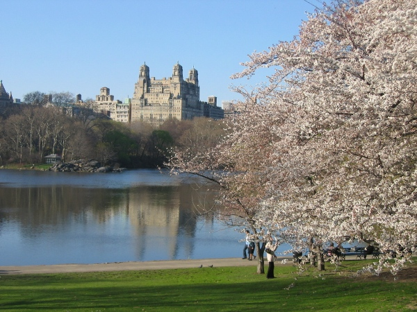 Picnics in Central Park are in Shorex's new portfolio