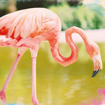 for-fb-flamingo