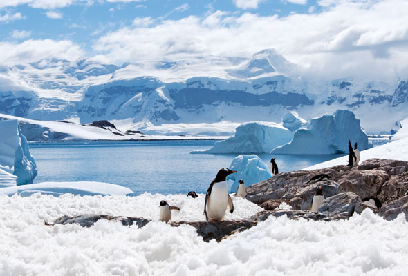 group-of-penguins-st-12-for-web
