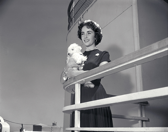 Liz Taylor with poodle 10708 copy
