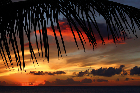 Palm tree leaves on a beach silhouetted against the setting sun, Maui. Credit: iStock