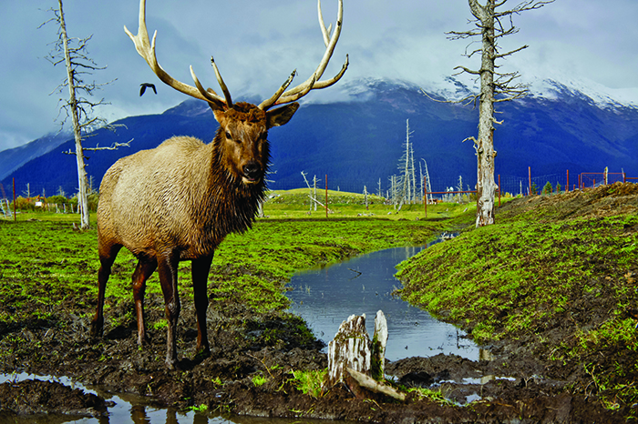 Spot wildlife on an Alaska cruise with Jetline