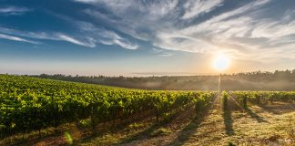 Bordeaux Viking River Cruises cruise deal of the day