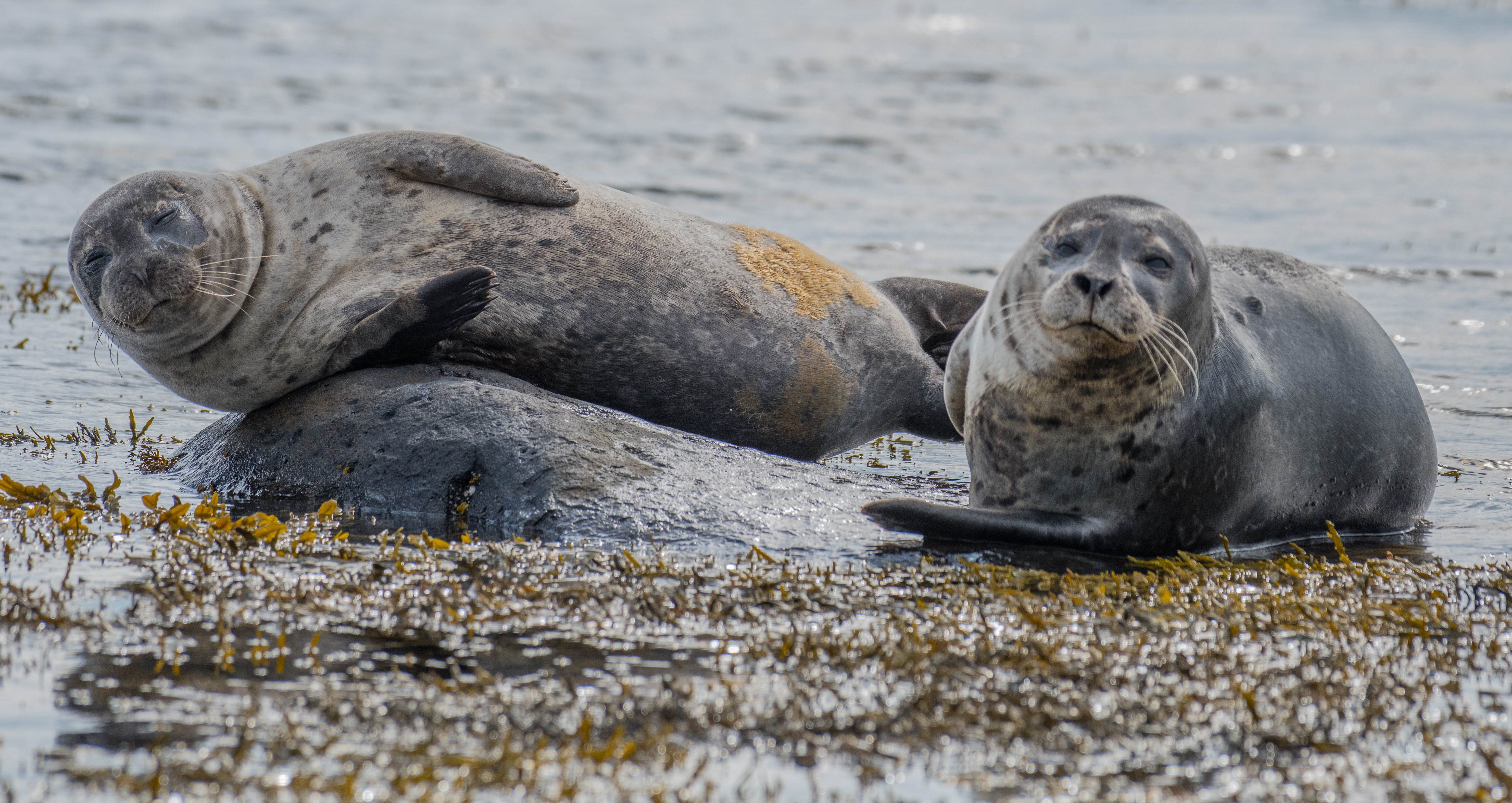 Seals in the Falkland Islands