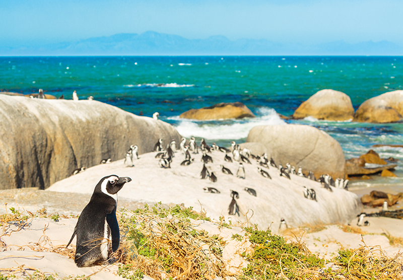 best-places-to-cruise-to-in-2020-south-africa