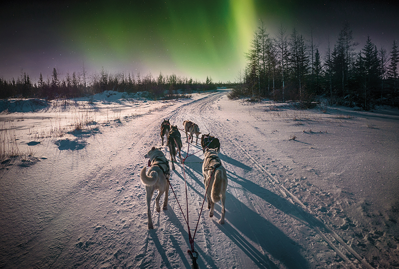 A group of husky dogs harnessed together run through snowy boreal forest. The Aurora Borealis in the sky