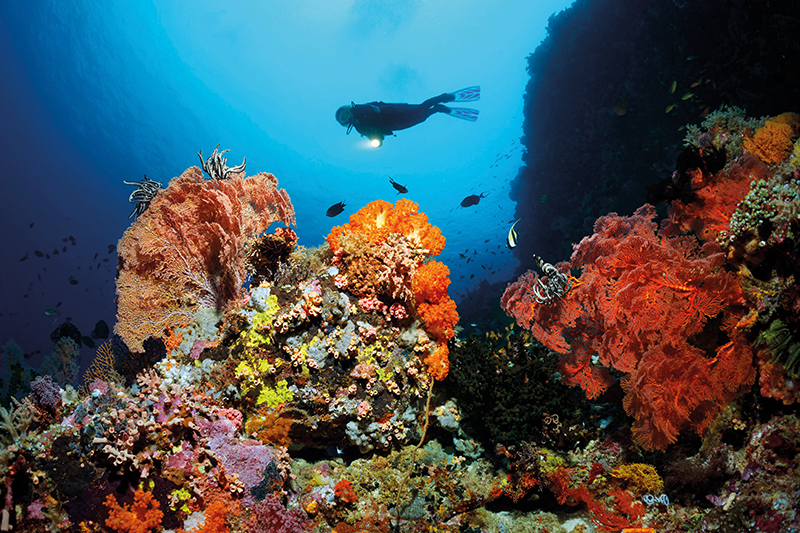 Diver near cliff, Coral reef, on the Great Barrier Reef, Australia