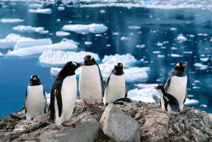 best-adventure-cruises-penguins-in-Antarctica