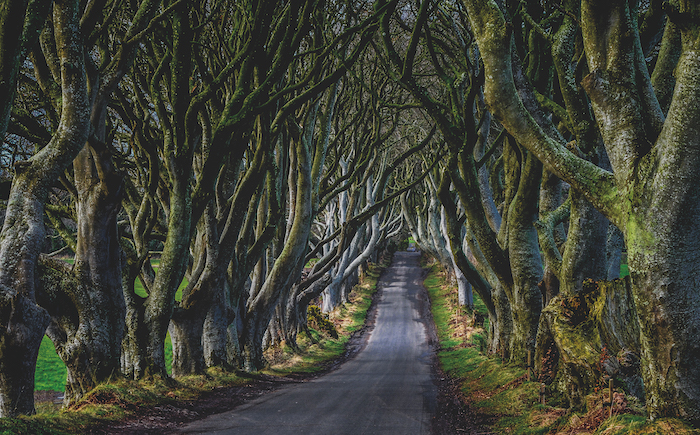 The Dark Hedges in Northern Ireland can be seen on Game of Thrones cruises