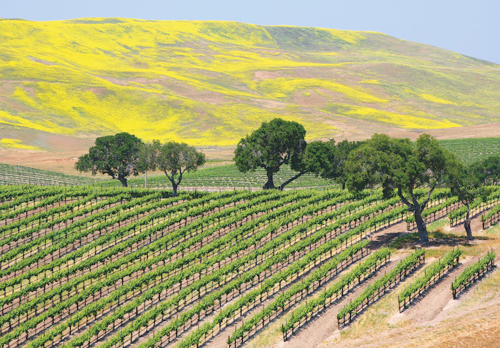 Vineyards-in-California-can-be-visited-on-a-USA-stay-and-cruise-holiday