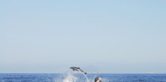 going-green-dolphins
